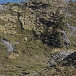 Pedra da Mina (7)